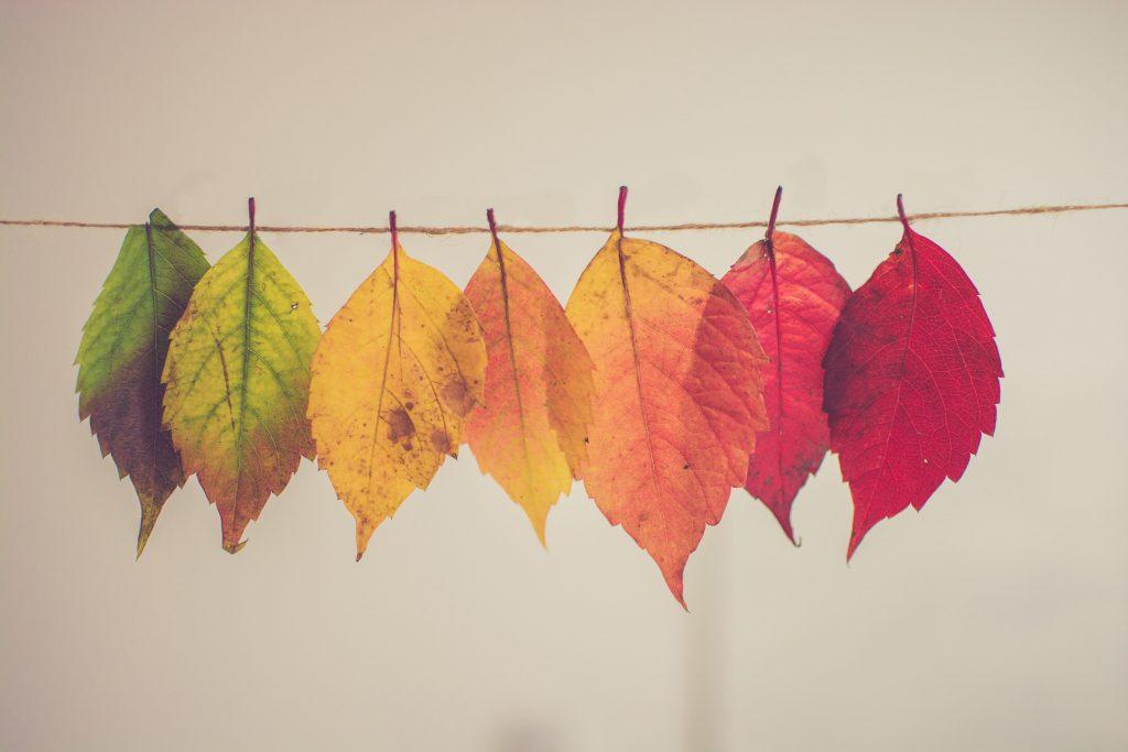 Tutti gli appuntamenti dell'autunno!